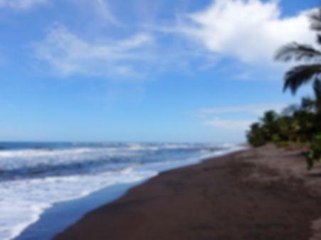 beach tortuguero costa rica