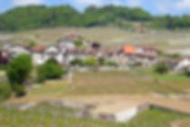 lausanne, switzerland, vineyards, winery