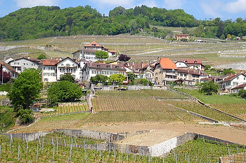 lausanne, switzerland, vineyards, winery