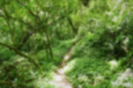 celque national park gracias honduras