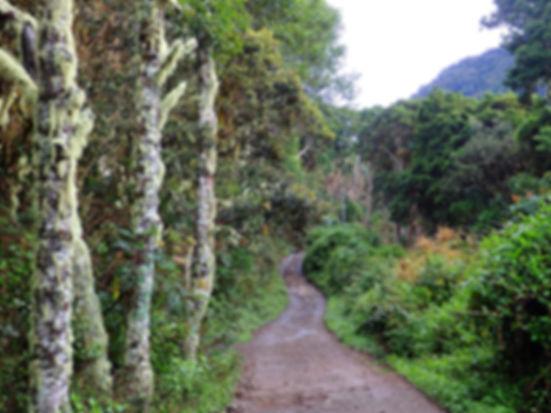 volcan baru boquete panama
