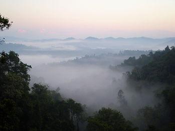 ziplining, gibbon experience, laos