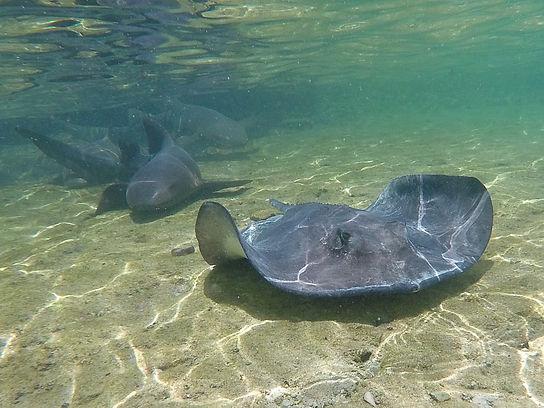 staniel cay, exumas, bahamas, stingray, shark