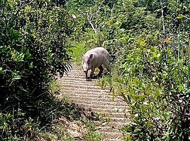 hiking, trail, hong kong, mountain, view, maclehose, scenery, pig