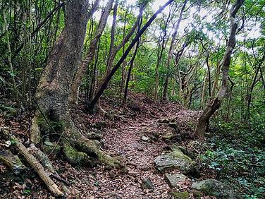 hong kong, trail, mountain, hiking, view, island