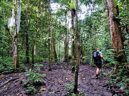 kokoda trail, track, papua new guinea, hike, trek, mountain, jungle, mud