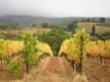 Tuscany, countryside, italy, vineyard