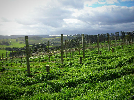 yarra valley winery australia