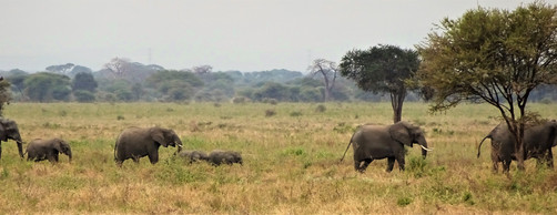 A whole family of elephants