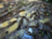 kokoda trail, track, papua new guinea, hike, trek, jungle, mountain, mud