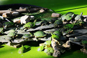 turtles, atocha train station, madrid, spain