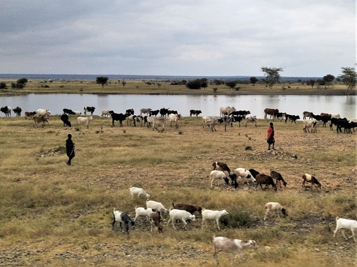Tanzanian countryside, reminding me of home