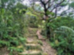 lantau island, lantau trail, view, trees, mountain, hiking, hong kong