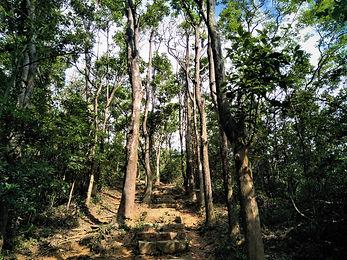 lantau island, lantau trail, view, mountain, hiking, stairs, trees, hong kong