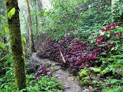 kokoda, trail, trak, papua new guinea, forest, jungle, mountain, hike, trek