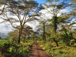 Lerai Forest