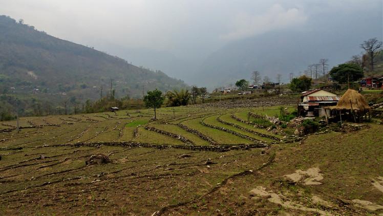 Hiking past rice fields