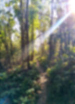 lamma island, hong kong, hiking, hike, mountains, scenery, nature, trees, sunlight