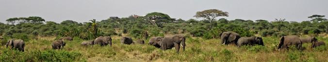 Elephant central