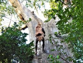 Climbing the baobab tree