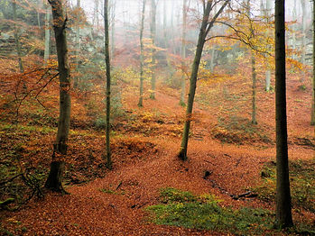 Nommern forest, luxembourg, autumn, hike