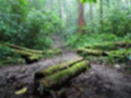 kokoda, trail, trak, papua new guinea, forest, jungle, mountain, hike, trek, mud