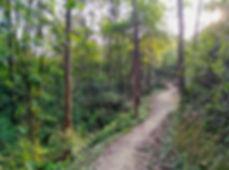 hiking, trail, hong kong, mountain, view, maclehose, scenery