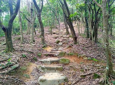 hiking, trail, hong kong, mountain, view, maclehose, scenery, stairs