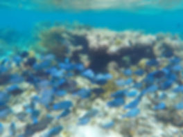 snorkeling, george town, cayman island