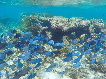 snorkeling, george town, cayman island