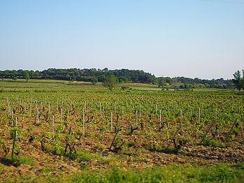 cotes du rhone, vineyard, france