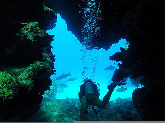 diving, george town, cayman island