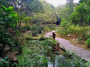 hong kong, trail, mountain, hiking, view, tai lam, new territories, ecological garden