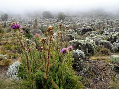 Plant-life returns