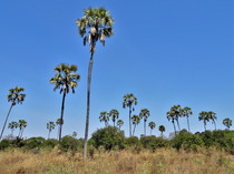 Palm-filled landscape