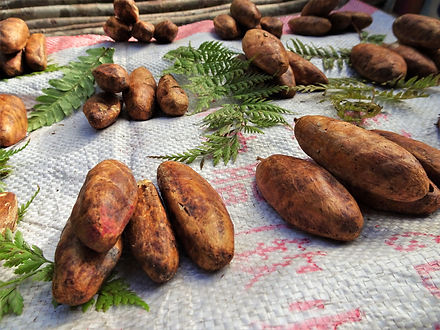 kokoda trail, track, papua new guinea, hike, trek, jungle, mountain, galip nuts