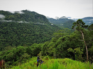 kokoda trail, track, papua new guinea, jungle, mountain, hike, trek, view