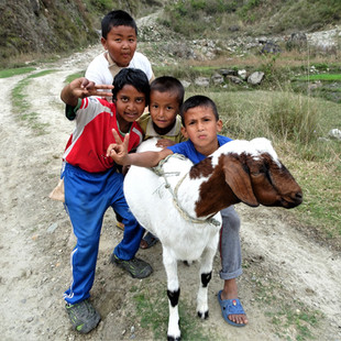 Kids showing off their goat