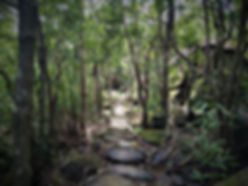 lantau island, lantau trail, view, mountain, forest, hiking, hong kong