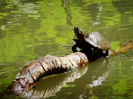 turtle parque metropolitano panama city