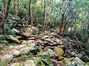 wilson trail, hong kong, hiking, mountains