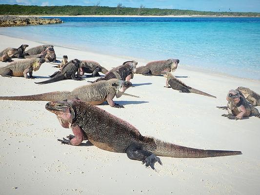 iguana cay, exumas, bahamas