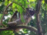 cerro ancon, sloth, panama city