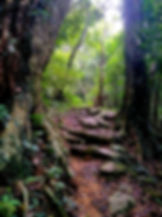 wilson trail, hong kong, hiking, mountains