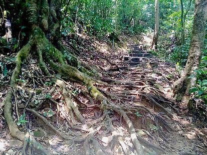 wilson trail, hong kong, hiking, mountains, trail