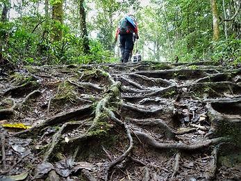 kokoda, trail, track, papua new guinea, hike, trek, roots