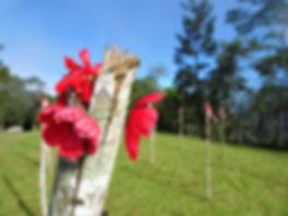 kokoda trail, track, papua new guinea, hike, trek, jungle, mountain, brigade hill, poppy
