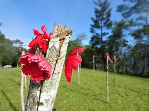 kokoda trail, track, papua new guinea, hike, trek