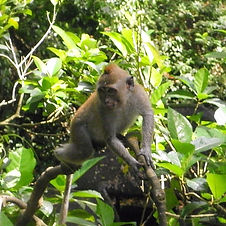 Sacred Monkey Forest Sanctuary (12)_edit