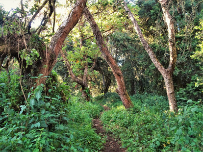 The path narrows